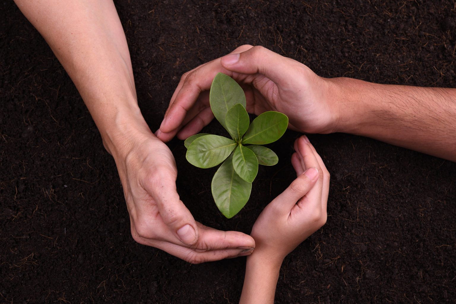 hands-protect-plant-7WPSVUN-re-1536x1024